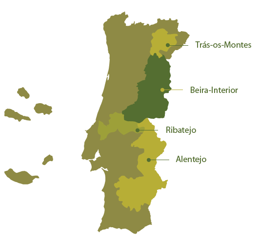 Olive Oil Regions