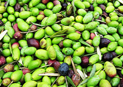 Olive Oil extracted at low or very low temperatures